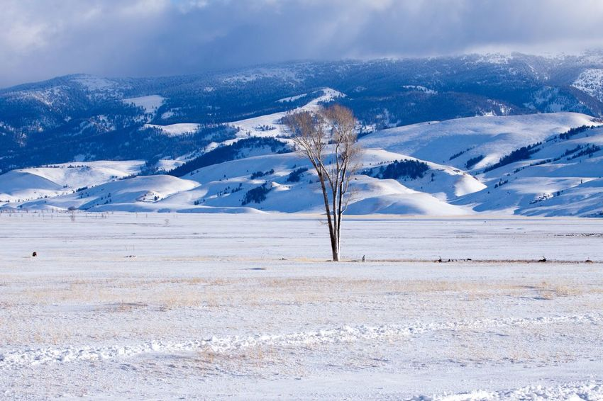A Lonely Tree Tree Snow Winter Cold Temperature Scenics Landscape Tranquil Scene Mountain Nature Extreme Terrain Beauty In Nature Tranquility Outdoors Blue Frozen Day Mountain Range Snowcapped Mountain Travel Destinations No People