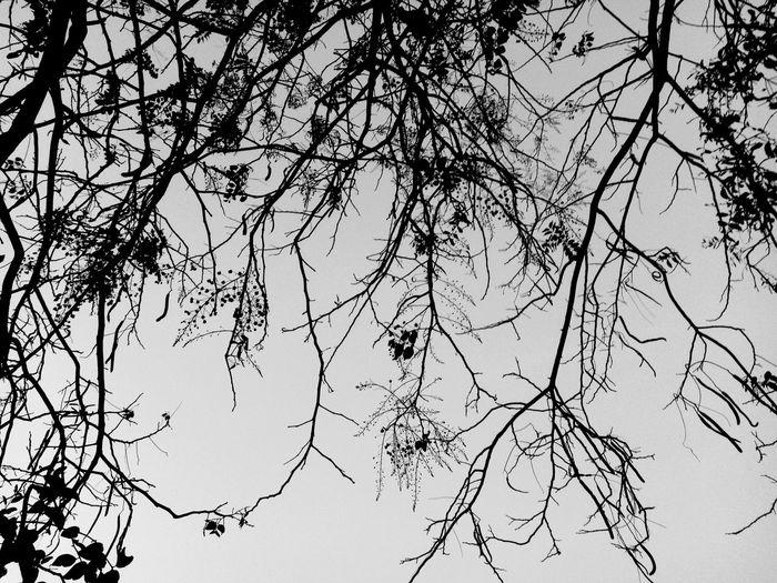 ชีวิตคนเราสั้นเกินกว่าที่จะเสียเวลาให้กับคนที่พรากความสุขไปจากเรา Bird Tree Branch Flower Bare Tree Backgrounds Silhouette Flying Sky Animal Themes