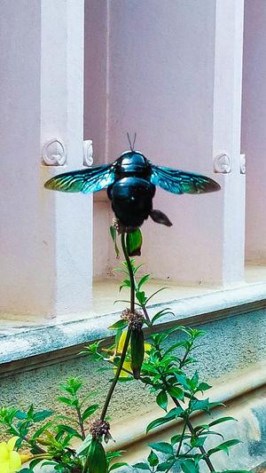 Black Beetles! Animal Animal Themes Bee Beetle On Leaf Black Beetle Close-up Day Insect Leaf Nature