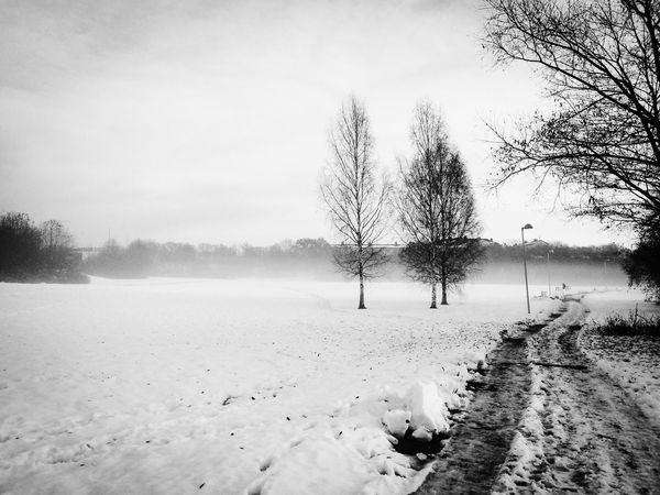 Cold Temperature Fog Winter Snow Tree Weather Nature Beauty In Nature Outdoors Day Forest Path Forest Blackandwhite Photography Eyeemgallary Ig_captures EyeEm Gallery Winter The Weak On EyeEm Winter Wonderland Beauty In Nature Eyeemphotography Weather Nature On Your Doorstep