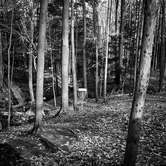 Hole 12 Discgolf Discgolfbasket League OrchardPark Chestnutridge Monochrome Blackandwhite Monochromatic