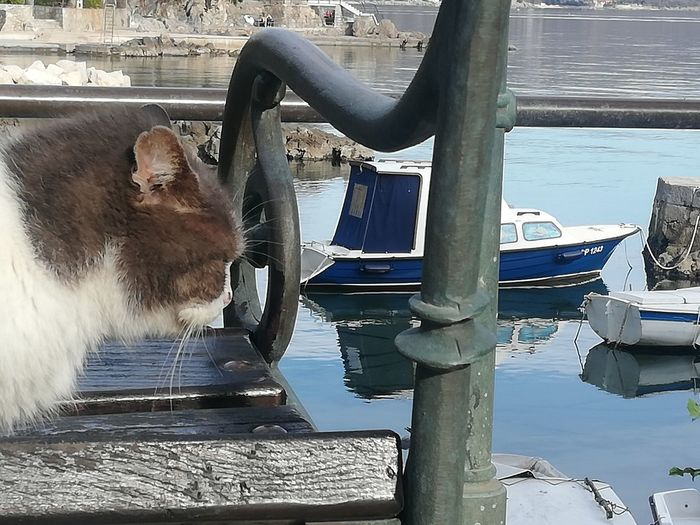 View of a cat on boat