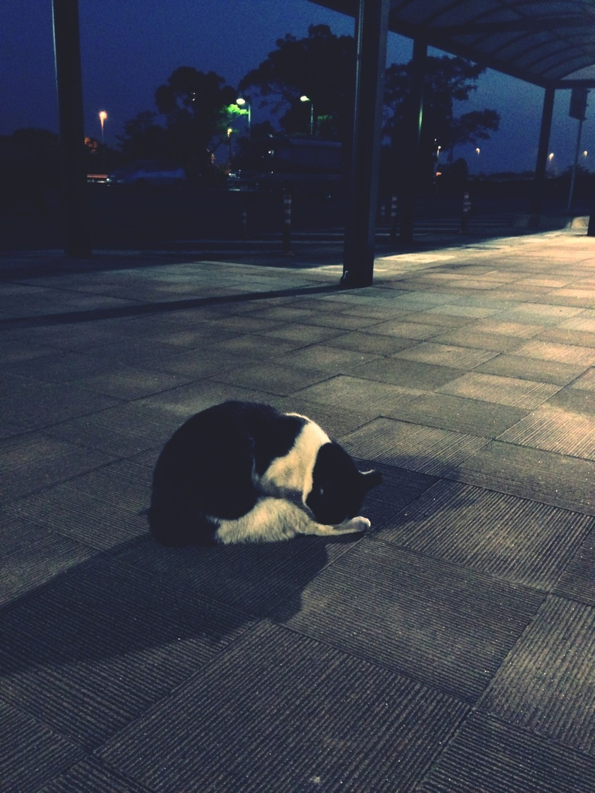 one animal, pets, animal themes, domestic animals, dog, mammal, street, night, shadow, sunlight, sitting, car, building exterior, road, domestic cat, full length, built structure, sidewalk, transportation, architecture
