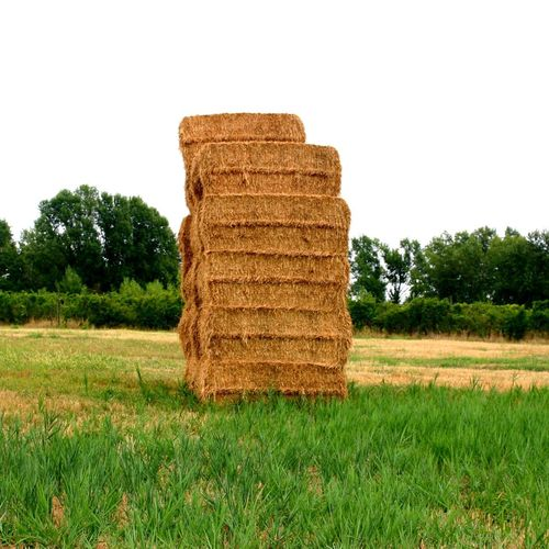 Hayball Ballhay Balledifieno Hay Bale Rural Scene Agriculture Gold Colored Tower Field Farm Grass No People Outdoors Nature Country Life Day