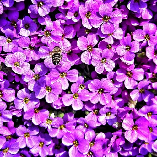 Flowers Bee Colorfull Lightday
