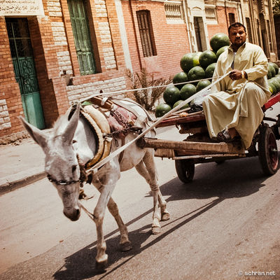 when I visited #egypt for the #xfighters event in #gizah. Some #refreshing cargo on this animal #truck in #cairo downtown ... Wish i would have a few of those now after such an #hot #summer day here in Germany. How is your summer going? Africa Donkey Card Egypt Fruit, Tartlet Melon