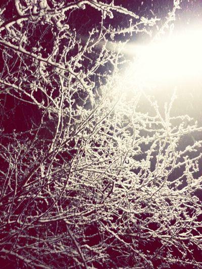 Nature Light Blackandwhite Tree Winter Snow Schnee Licht Schwarzweiß Pics By Mr_badabing Baum