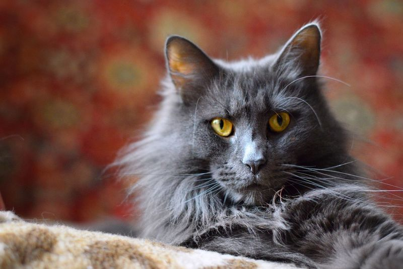 Cat Domestic Cat Pets Feline Domestic One Animal Domestic Animals Mammal Portrait Looking At Camera Vertebrate Whisker Animal Body Part No People Close-up Focus On Foreground Eye Yellow Eyes Animal Eye