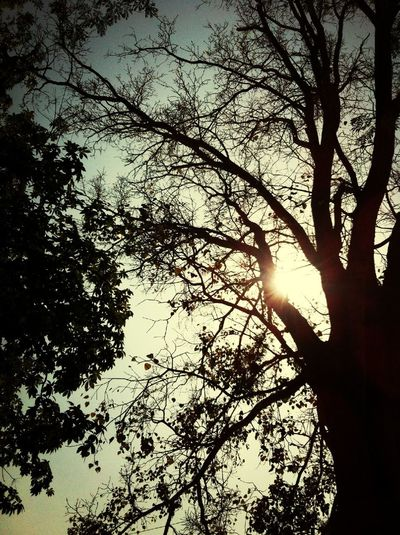 ต้นไม้ใหญ่