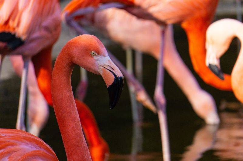 Flamingo Sony A6000 Animal Themes Orange Color Flamingo Portrait Animal Themes Animal Vertebrate Group Of Animals Animals In The Wild Flamingo Animal Wildlife Animal Body Part Fish Sea Nature Water Medium Group Of Animals Focus On Foreground Bird Outdoors Orange Color No People Day Close-up