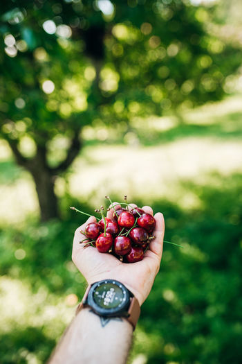 Hand holding strawberry
