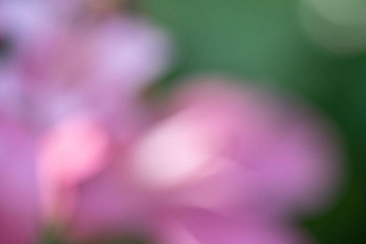 sweet petal flower for background