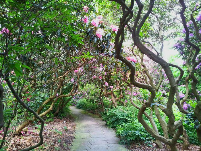 Berggarten, herrenhaueser gaerten, hanover, germany Gardens A Walk In The Park Parks And Recreation The Great Outdoors - 2015 EyeEm Awards