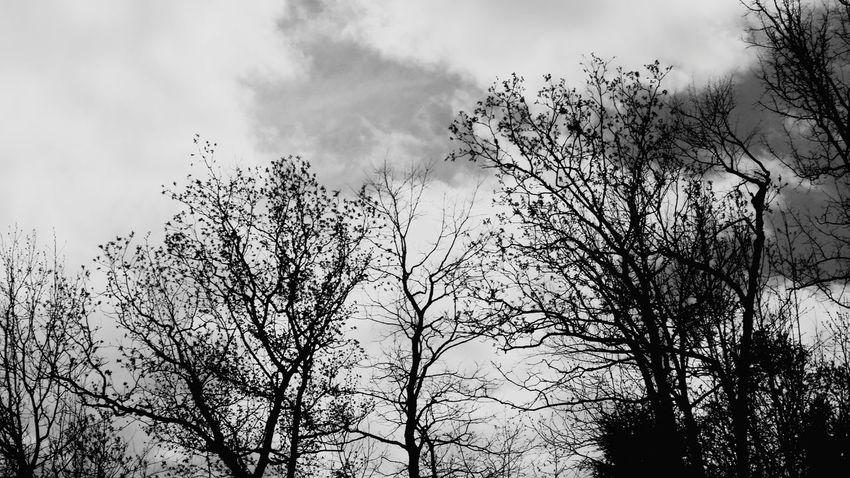 Tree Silhouette Sky Growing