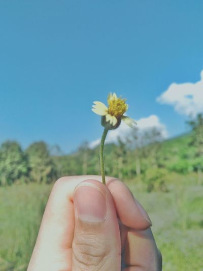 Cropped image of hand holding flower against clear sky