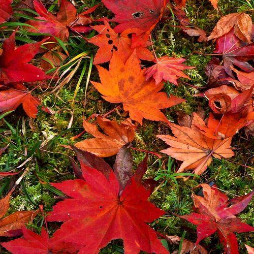 今夜は冷えるぅ〜 Autumn Leaves Autumn Colors Autumn EyeEm Best Shots Urban Geometry Urban Taking Photos Enjoying Life Hello World Streetphotography