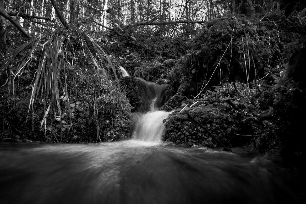 tree, plant, motion, forest, land, long exposure, nature, water, no people, blurred motion, flowing water, scenics - nature, beauty in nature, rock, waterfall, rock - object, day, solid, outdoors, flowing, rainforest, falling water, power in nature