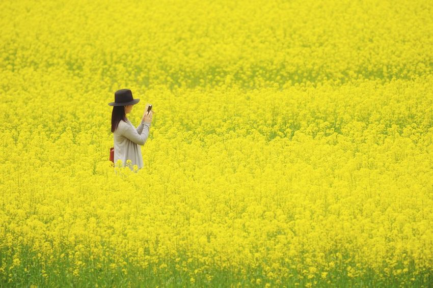 Capture The Moment Fantasy Field Yellow Flower Only Women Selective Focus Snapshots Of Life Rural Scene EyeEm Nature Lover Beauty In Nature Uzu St. Uzuki Of The Flower Fine Art Fantastic Minimalism Depth Of Field Relaxing One Person Nature Full Frame Detail Sigma EyeEm Best Shots 17_05 BYOPaper! The Street Photographer - 2017 EyeEm Awards The Great Outdoors - 2017 EyeEm Awards The Great Outdoors - 2017 EyeEm Awards The Portraitist - 2017 EyeEm Awards EyeEmNewHere Live For The Story Place Of Heart Sommergefühle 100 Days Of Summer EyeEm Selects Lost In The Landscape Paint The Town Yellow