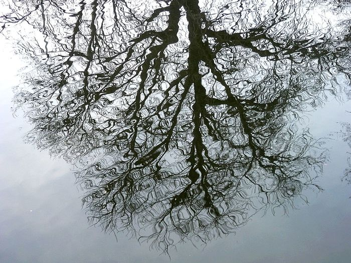 TakeoverContrast Tree Nature Reflection Berlin