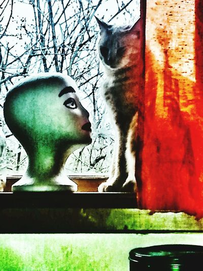 Close-up Portland Oregon Usa Cat In Window Maniquin Head Day Cat And A Head
