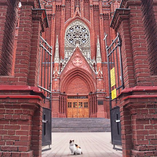 Cat Sitting In Cathedral