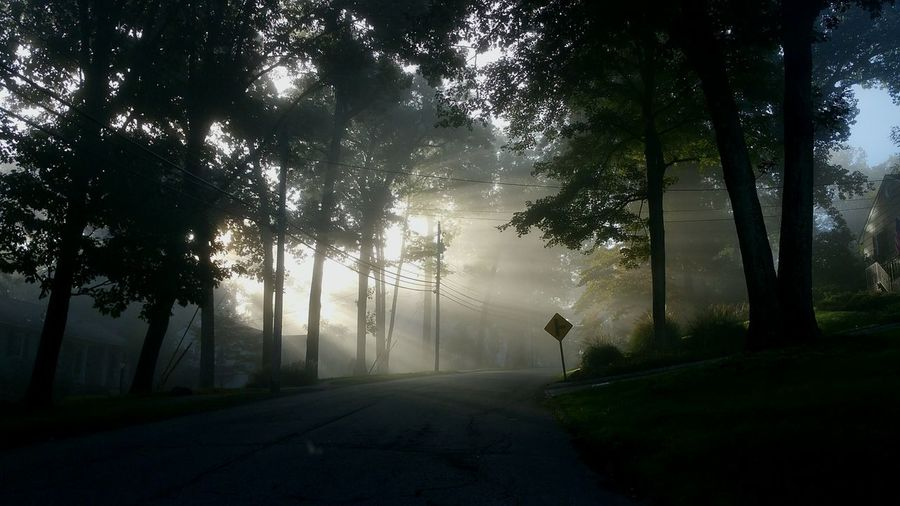 Tree Fog Road Nature Grass Landscape Beauty In Nature No People Street Sign Streaks Of Light Sun Morning