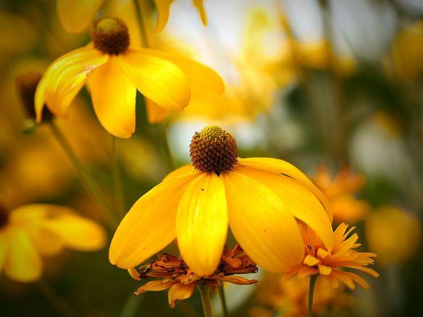 43 Golden Moments Macroflowerphotography Naturel Light FlowerofLove Flowers On My Way Focus On Foreground