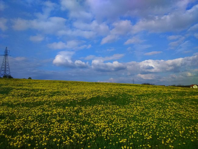 Energy Supply Outdoor Photography Spring Photography Yellowflower Fields Of Gold Yellow Flowers The Great Outdoors - 2017 EyeEm Awards Fields And Sky Landscape Nature Photography Landscape_photography Taking Photos Fieldscape Outdoors EyEmNewHere