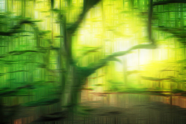 Full frame shot of illuminated plants