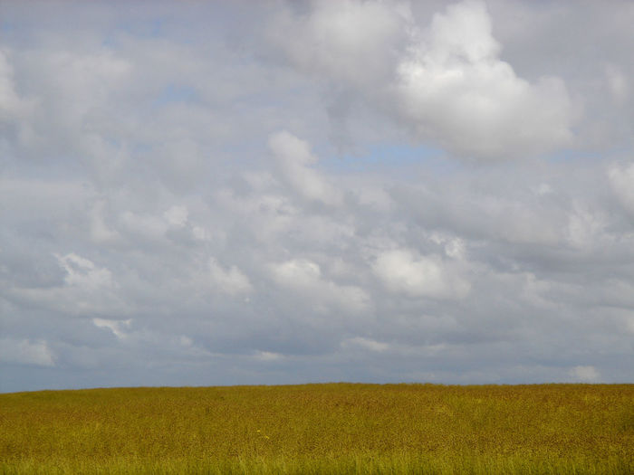 A field in France. Beauty In Nature Cloud - Sky Day Environment Field Horizon Horizon Over Land Land Landscape Nature No People Outdoors Sky Tranquility