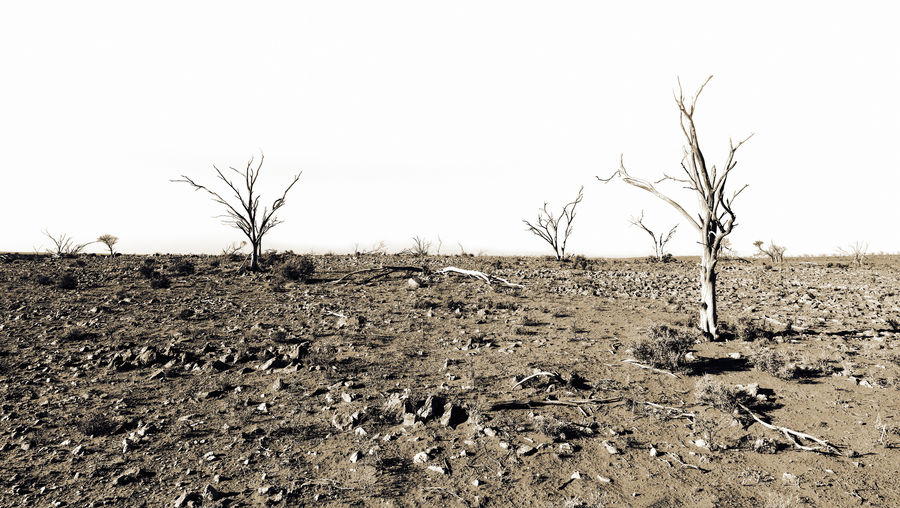 Desert Arid Climate Bare Tree Clear Sky Climate Field Land Landscape No People Remote Tree