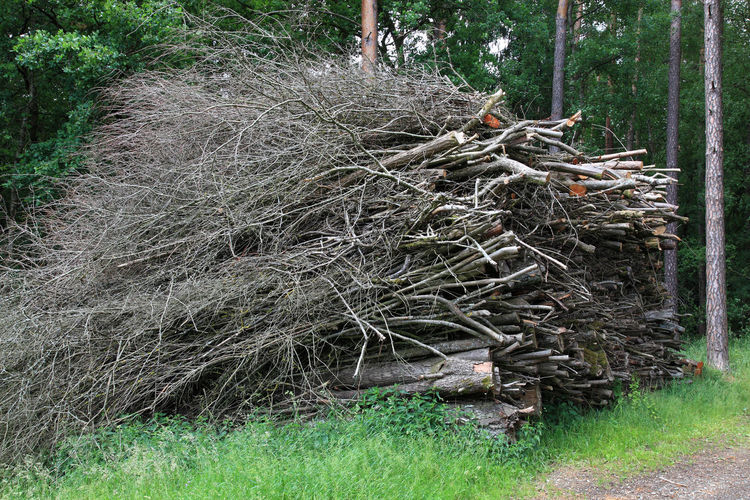 A large pile of wood waste at the forestry is waiting for the shredder Day Dead Plant Field Firewood Firewood Stack Forest Grass Green Color Growth Land Log Nature No People Outdoors Plant Root Tranquility Tree Tree Trunk Trunk Wood Wood - Material WoodLand