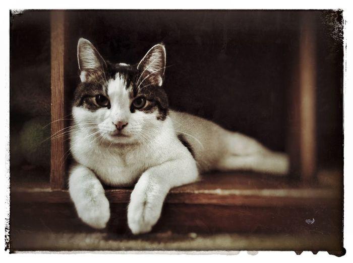 """Patches"" Cat Pets Kitty Love IPadography Feline Katze TabbyCat Cute Cats"