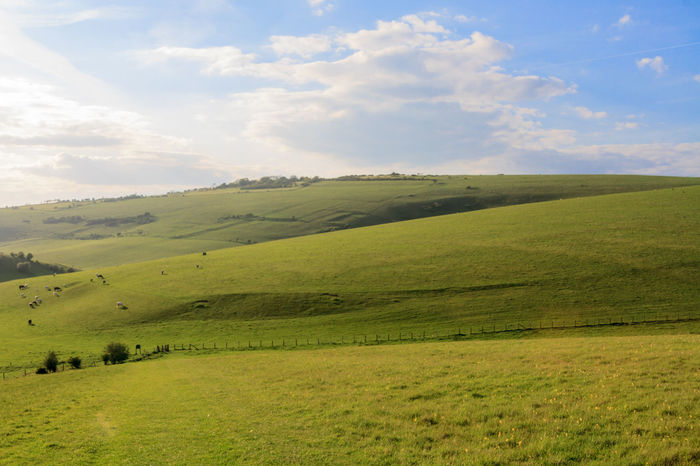 Sussex Landscape Beauty In Nature Cloud - Sky Countryside Day Field Grass Grassy Green Green Color Growth Hill Horizon Over Land Idyllic Landscape Nature No People Outdoors Remote Rural Scene Scenics Sky South Downs Sussex Downs Tranquil Scene Tranquility