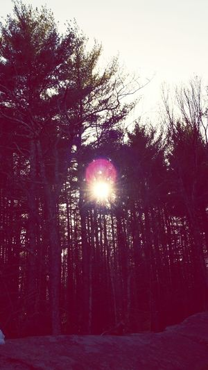Sky Trees Nature Spring Massachusetts Worcester Sun Atardecer Enjoying Life No More Snow