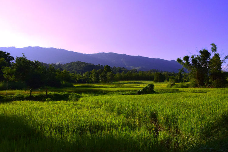 Scenic view of grassy field against blue sky on sunny day