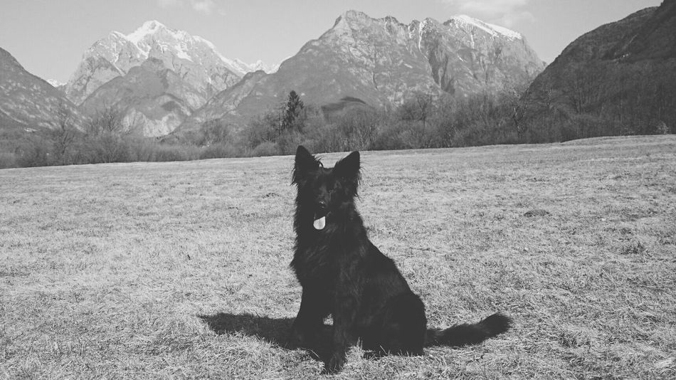 Doggy Mountains Hometown Nature Hiking❤ Love ♥ Beautiful Day