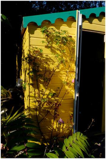 Close-up of yellow glass window