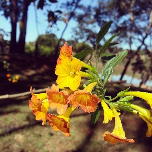 Chacara Goianira Amomuito Pralaqueeuvou flores paisagem verde cores goias brazilingram instagramgoias