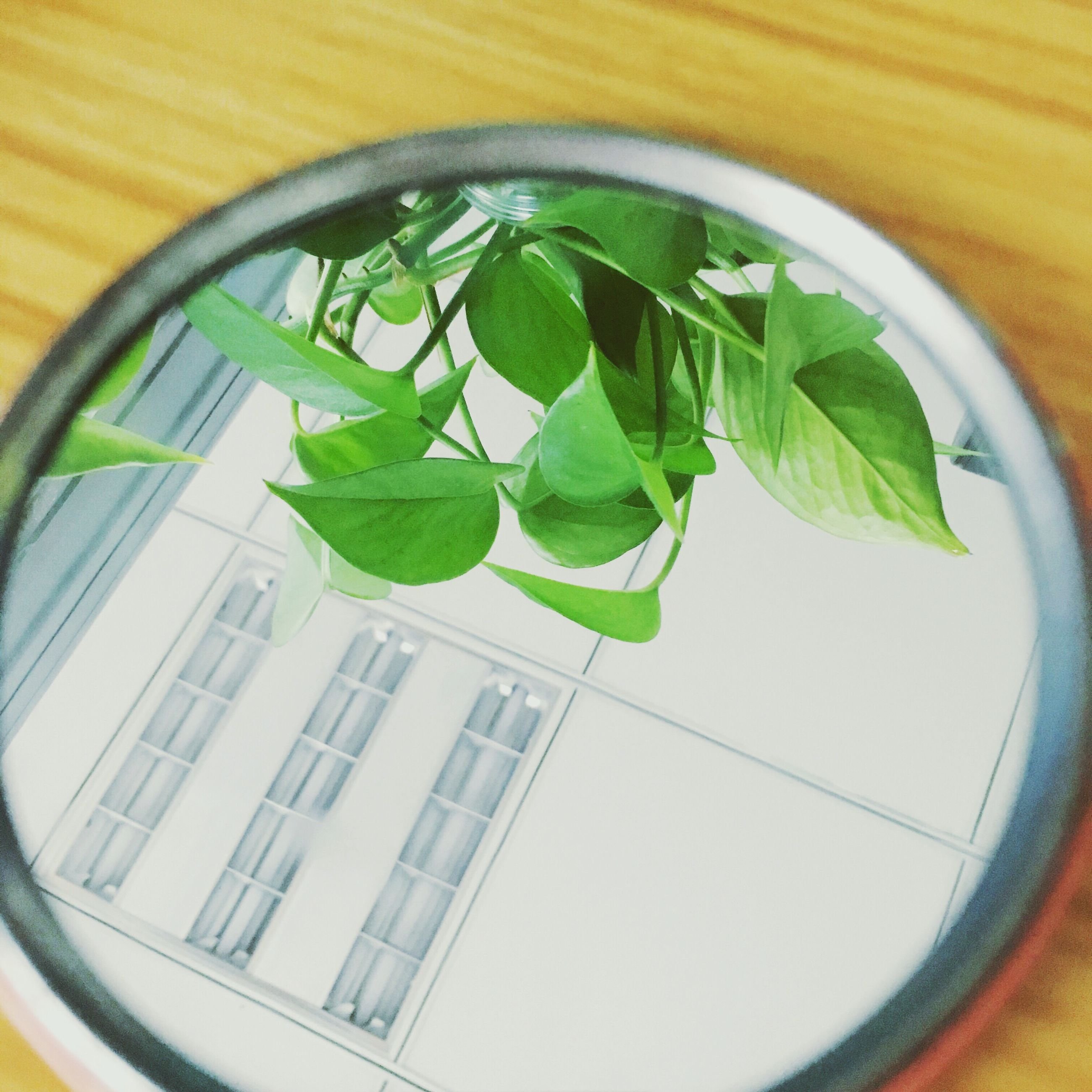 leaf, close-up, window, growth, plant, green color, freshness, day, circle, no people