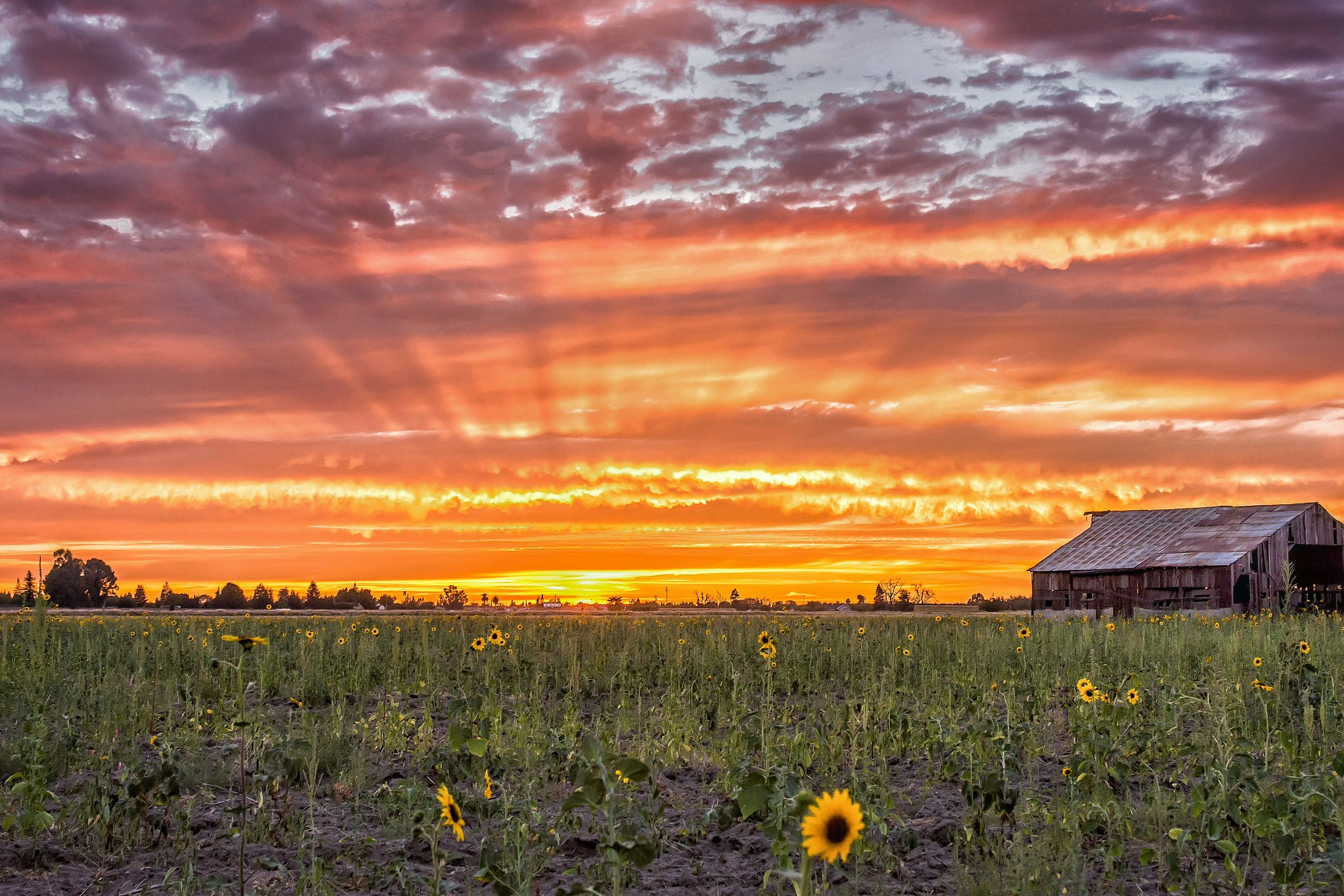 sunset, nature, beauty in nature, cloud - sky, field, sky, growth, plant, orange color, built structure, dramatic sky, scenics, architecture, tranquil scene, outdoors, building exterior, no people, tranquility, landscape, flower, rural scene, agriculture, yellow, grass, day, freshness