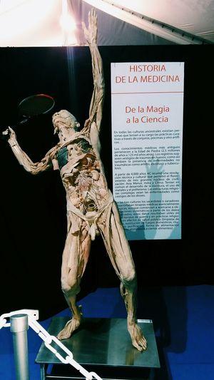 Expo Bodies, Viña del Mar Bodies Bodiesexhibt Humanbody Anatomy Humananatomy VSCO Expobodies