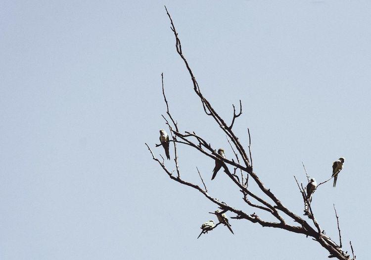 Leafless Auntum Cielo Otoño árbol Pajaros Ramas Rama Branch Birds Tree Plant Nature Low Angle View Sky