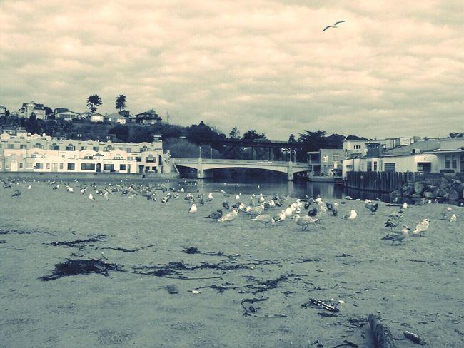 Nature Birds seagulls Ocean, Beach, Nature, Calm, Capitola,sand
