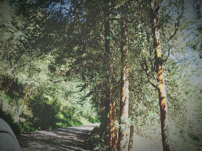 Viajando Carro Fotografia Fotography Colombia Antiguo Colombia Es Bella Turmeque Boyaca Colombia ♥  Mundo Nature Arbol. Paisaje Natural Hojas Fine Art Photography Arboles Camino Carretera