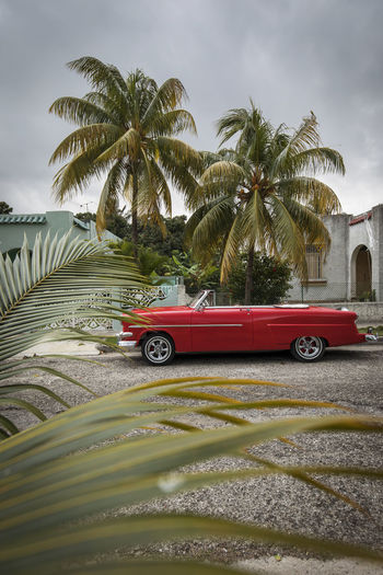 Red car on road by palm trees against sky