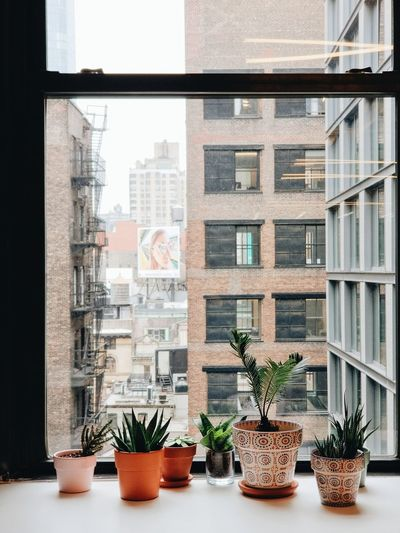 Plants on a window sill in nyc