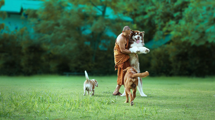 Full length of monk playing with dogs on field at park