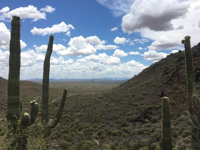 Nature Desert Hiking View Scenic Desert Landscape Saquaro Cacti Daytime Clouds And Sky Mountains Cactus Flowers