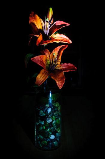 Dark Tiger Lilly In A Vase Arangment Close Up Close-up Composition Dark Decoration Floral Flower Garden Indoors  Lilly Nature Still Life Studio Shot Tiger Tigerlilly Vase